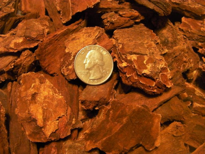 Large Nugget Bark.  Quarter used to help show approx. size.